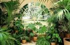 Комнатные растения в период нашего отпуска