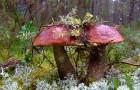 Биологические особенности грибов