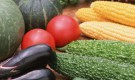 Как посеять огурцы, тыкву, кабачки