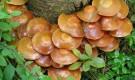 Питание гриба