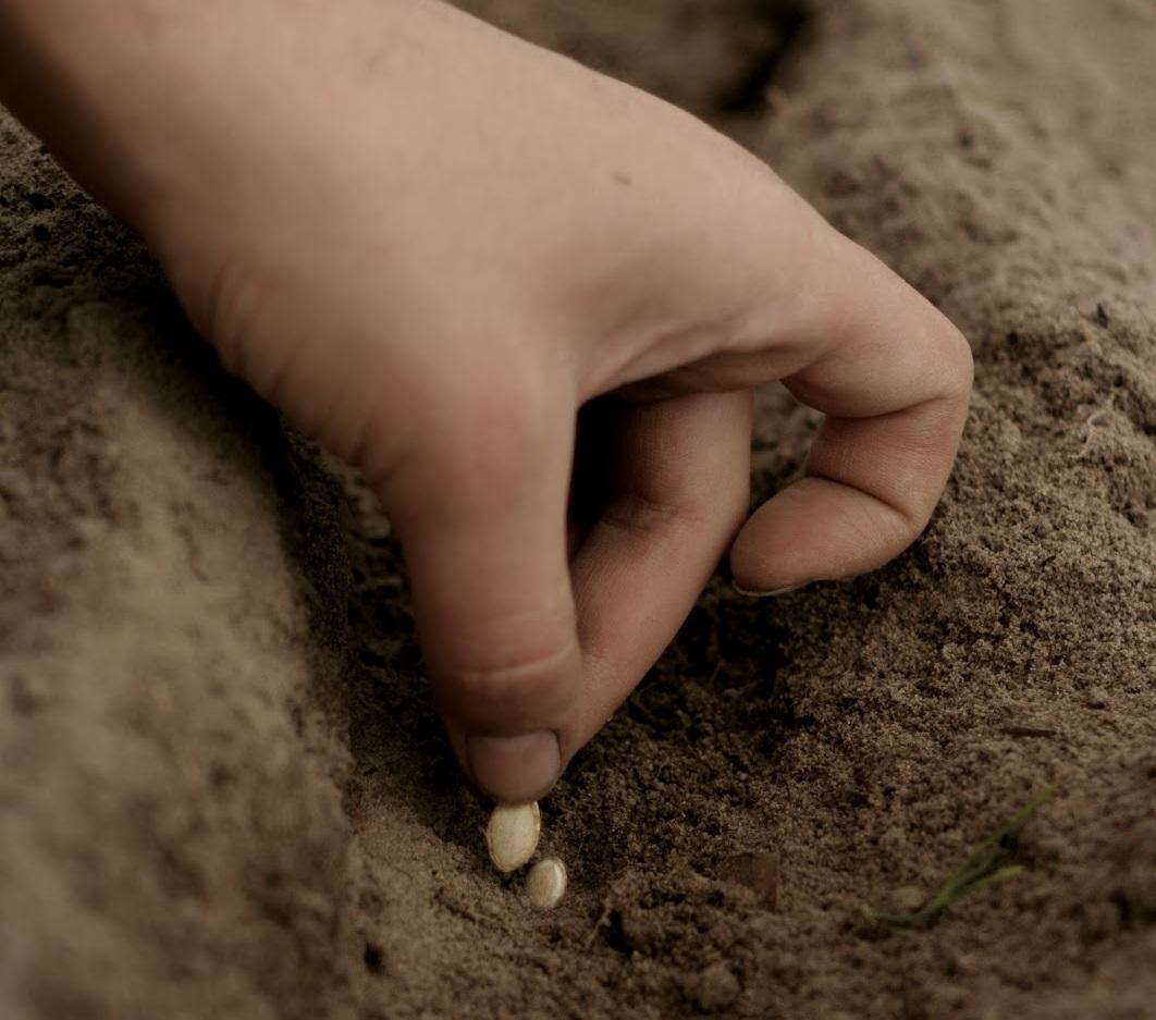 Посев сухими семенами прямо в почву