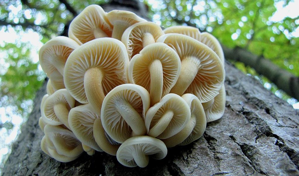 Развитие грибов