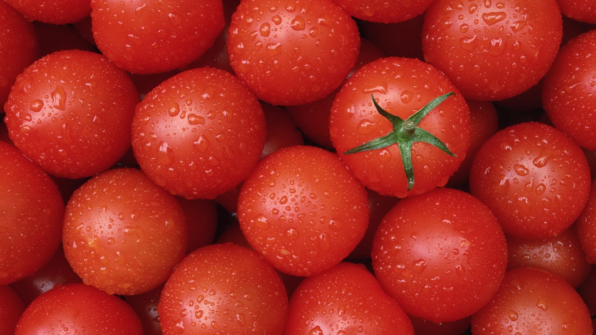 Как правильно посеять семена томатов