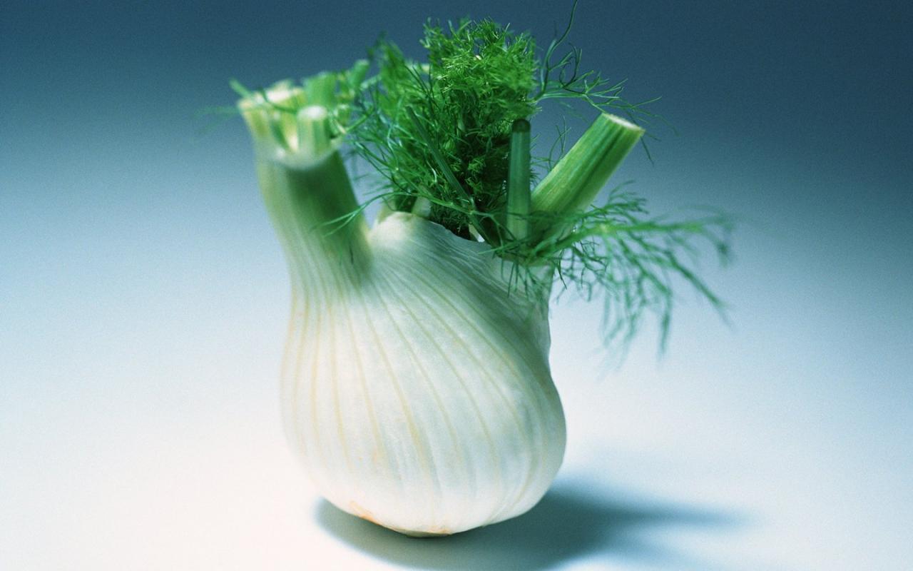 Фенхель овощной