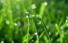 Когда и как нужно удобрять газон