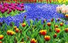 Совместимость окрасок в цветниках