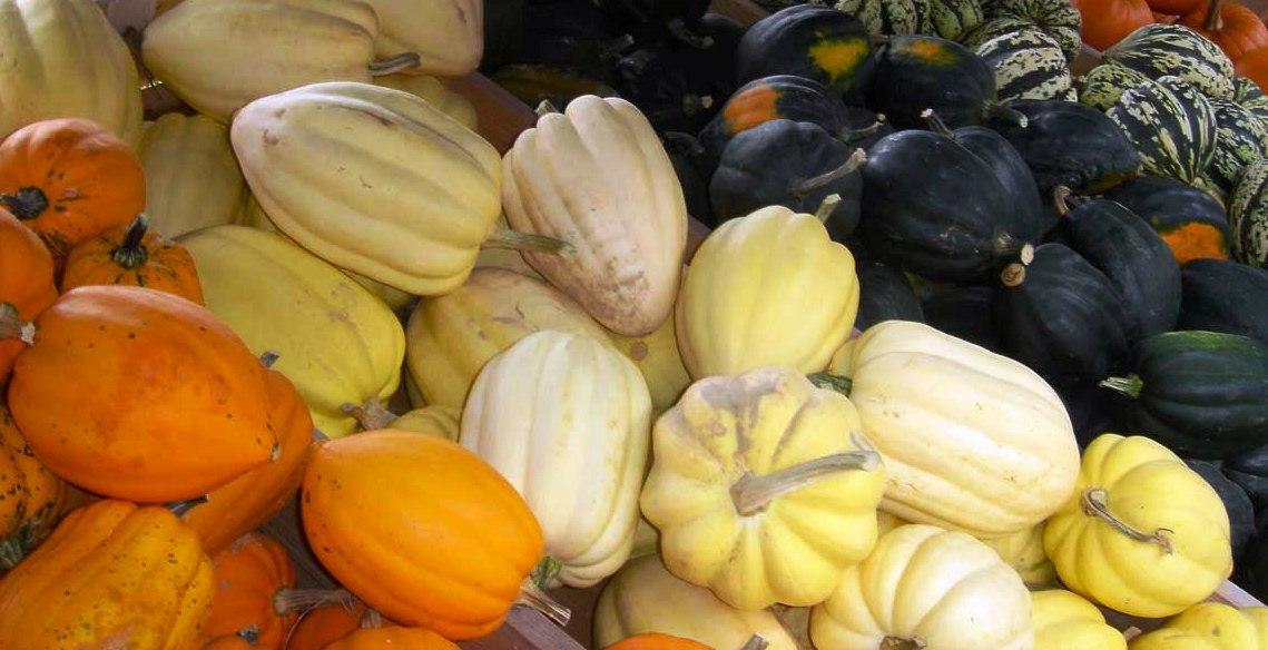 Тыквы овощные: кабачок, патиссон, крукнек