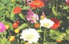 Общие правила выращивания травянистых многолетников в саду