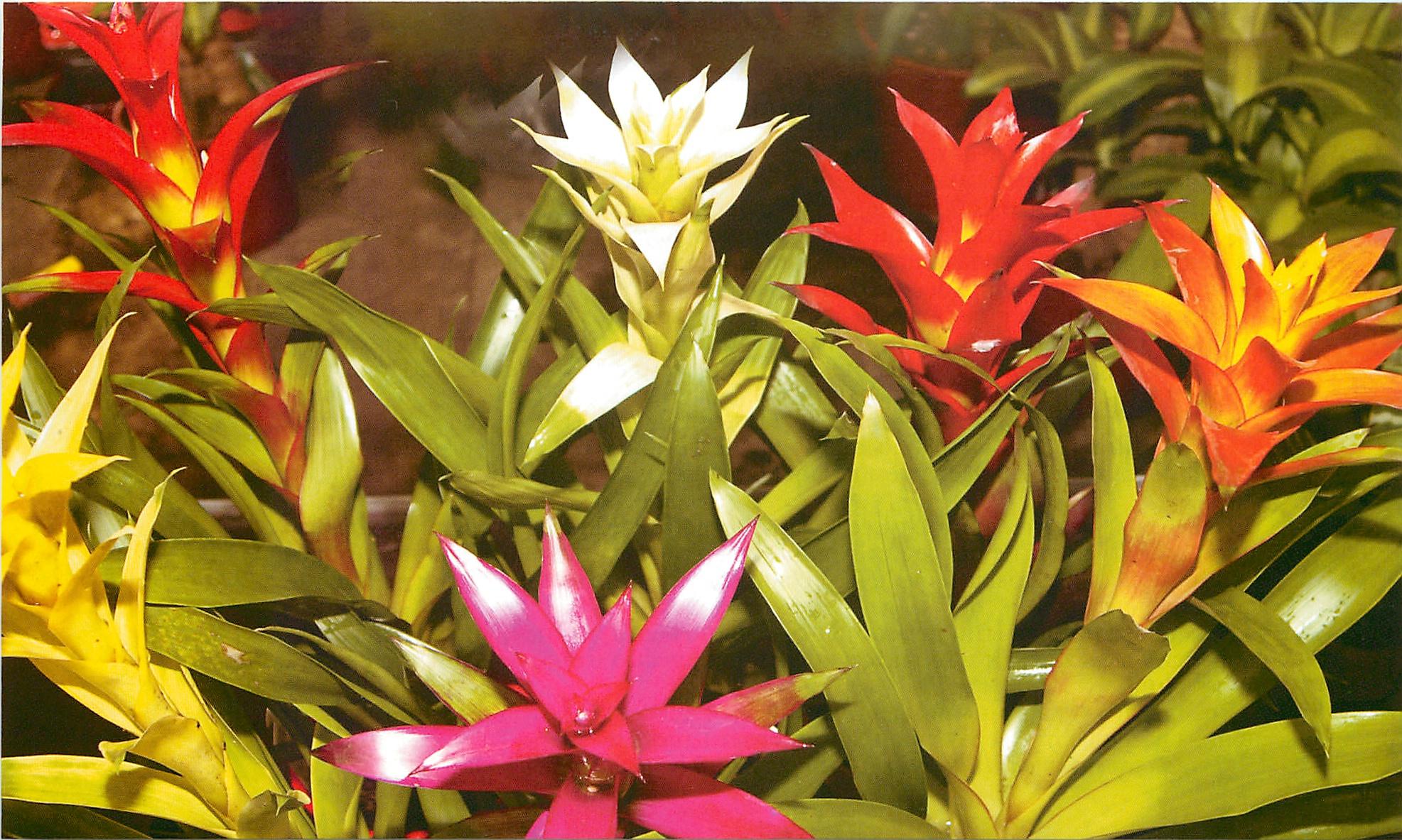 Цветок с длинными листьями и красным цветком фото