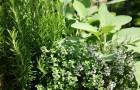 Премудрости заготовки трав