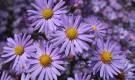 Цветник в конце лета — начале осени