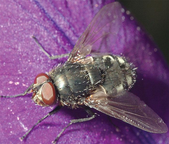 Борьба с капустной мухой