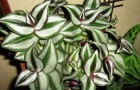 Что делать при избыточном освещении растений?