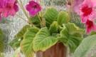 Что это такое — неинфекционные болезни растении?