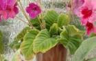 Что это такое - неинфекционные болезни растении?