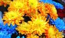 Секреты цветника