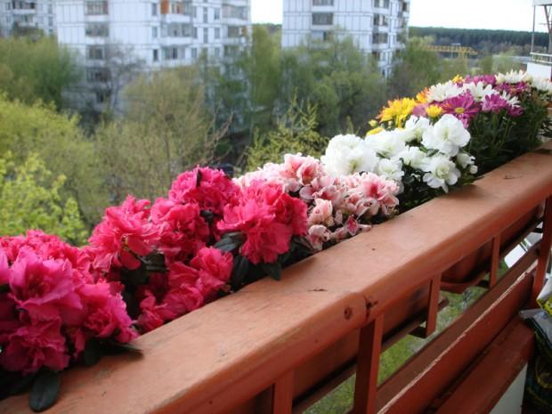 Как часто нужно поливать цветы на балконе?