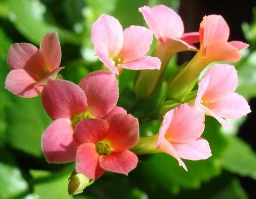 Как определить, что растение страдает от недостатка воды?