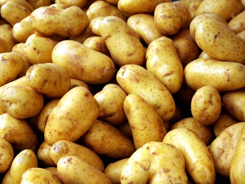 Как правильно подготовить участок для посадки картофеля?