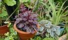 Как правильно подкармливать комнатные растения?