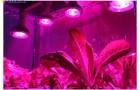 Как растения дополнительно освещают осенью и зимой?