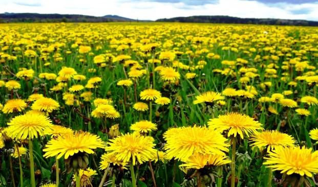 Как сорняки становятся суперпродуктами