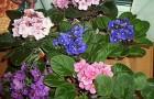 Как влияет на комнатные растения избыточное освещение