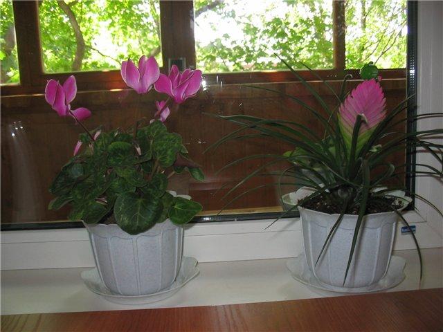 Какие особые требования растения предъявляют к поливу?