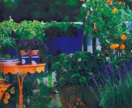 Какие пряности можно выращивают на балконе?