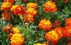 Какие растения можно выращивать на балконе, выходящем на юг?