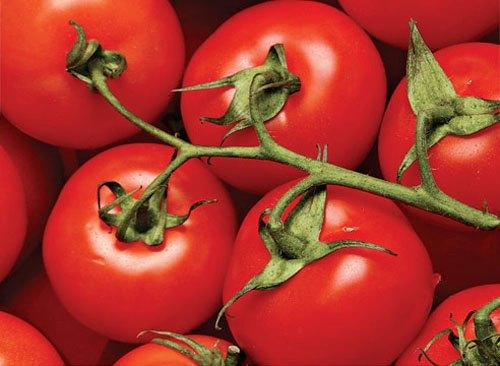 Какие сорта томата лучше выращивать в теплице?