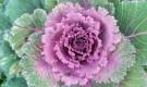 Что такое «растение длинного дня»?