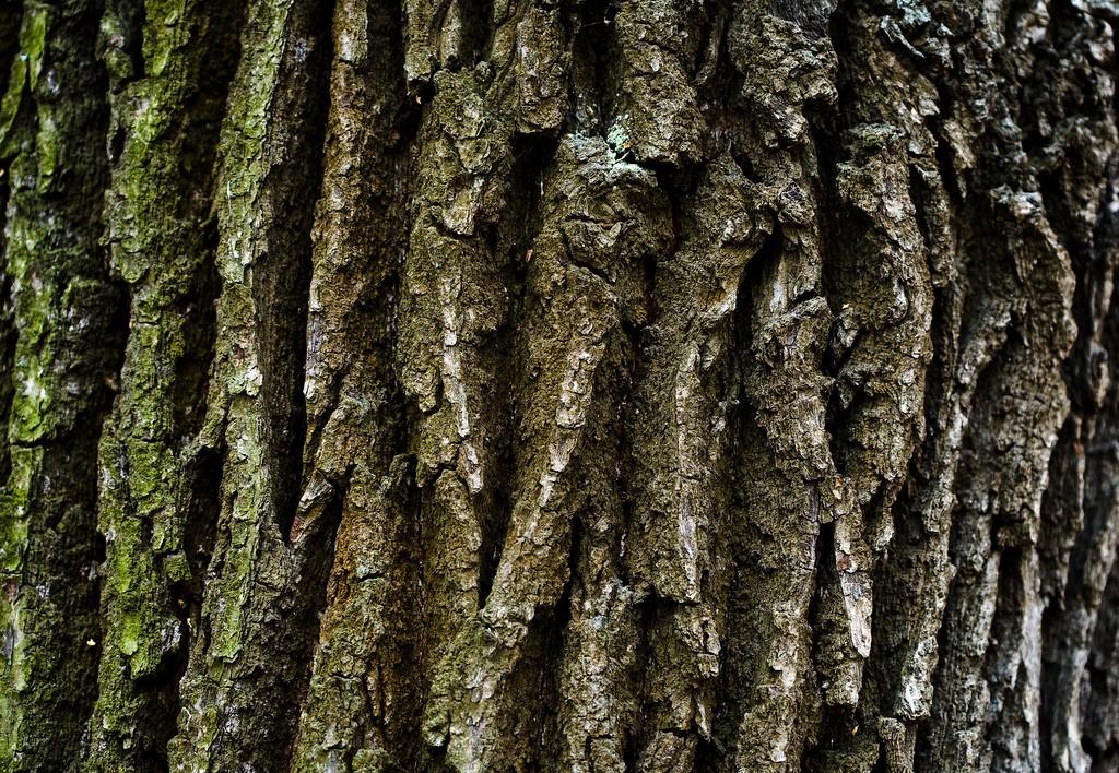 корни рябины фото