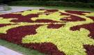 Растения для ковровых цветников