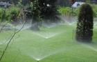Лучшее время для поливки садов