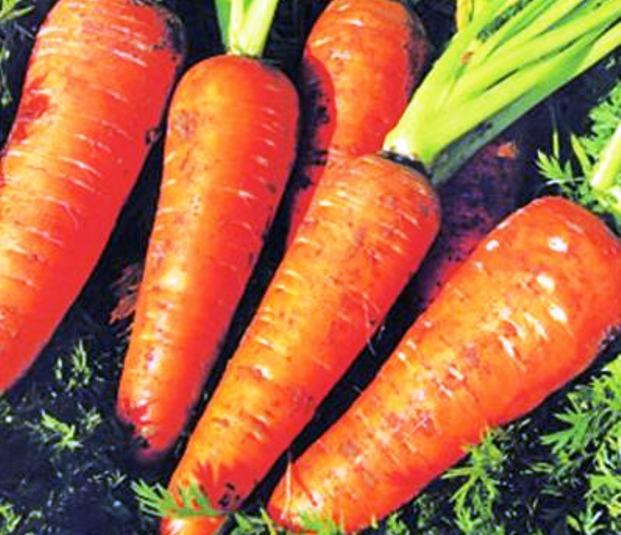Мозаика моркови
