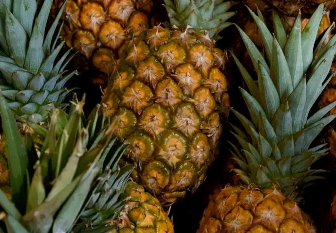 Можно ли дома вырастить ананас?