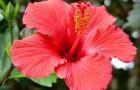 Можно ли комнатные растения переносить на лето в сад?