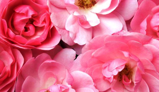 Наливка из лепестков розы