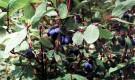 Нормативы для плодовых культур