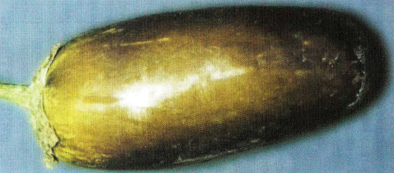 Обесцвечивание плода баклажана