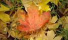 Сжигать ли осенью опавшие листья?