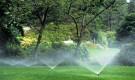 Надо ли осенью подкармливать и поливать деревья в саду?