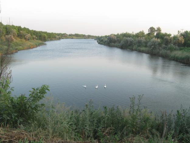 Избыток железа в поливной воде