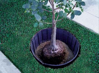 Преграда для корней