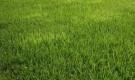 Когда лучшие сеять газон?