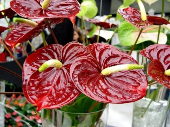 Сколько воды нужно комнатному растению?