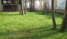 На какую высоту скашивают газонные травы?