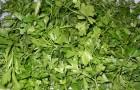 Сушка зелени
