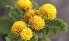 Настои трав, помогающие ослабить деятельность сальных желез (для жирных волос)